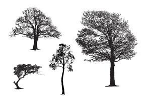 Ensemble maître d'arbre