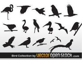 Vecteezy-thumb-bird-collection