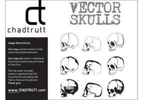 Human-skulls-vector
