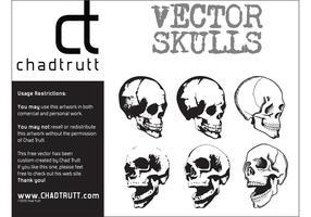 Vector-human-skulls-2