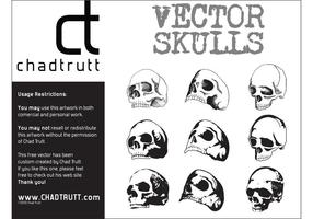 Mänskliga skalle 3