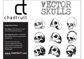 Crânes humains 3