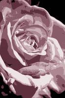 Vector de flores - Rose