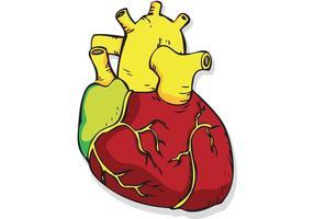 Corazón Vector libre