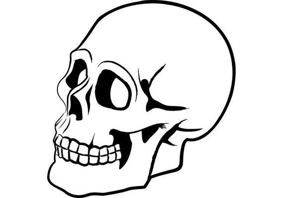 simple skull sketch