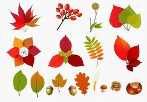 Paquete de vectores de hojas de otoño