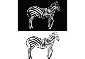 Image du vecteur Zebra