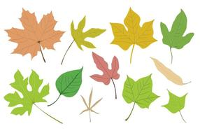 Vector-leaf-collection