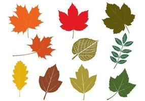 Fall Leaves Vector Pack