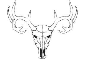 Vetor de crânio cervo