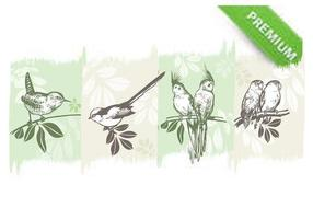 Birds-on-branches-vector-pack