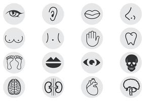 Human Body Parts Vector Pack