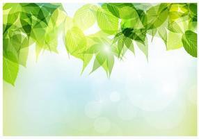 Fondo de vectores de hojas de primavera Bokeh