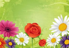 Daisies-and-roses-flower-background