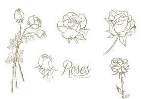 Conjunto de vectores de rosas dibujadas a mano