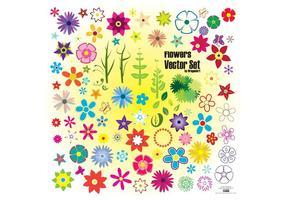 Flores coloridas de verão