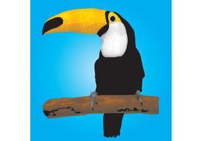 Toucan fågel