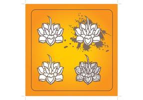 Flores de lótus
