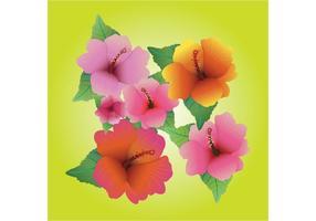 Hibiscusvectoren