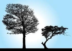 Tree Silhouette Vectors