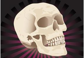 Free Realistic Skull Vector