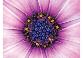 Pink primer de la flor