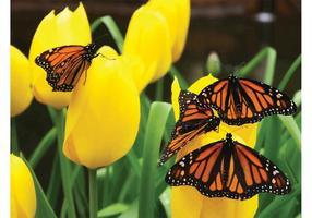 Flores de las mariposas