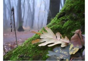 Herbst Wald Moose