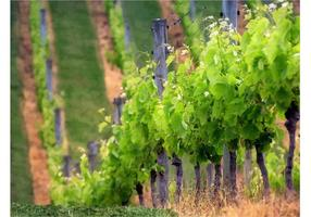 Wijngaard Rijen