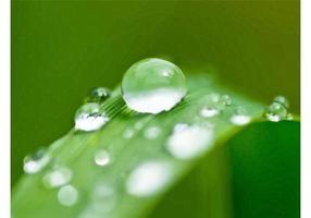 Macro Dew Image