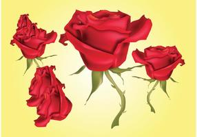 Red Roses Vector Illustrations