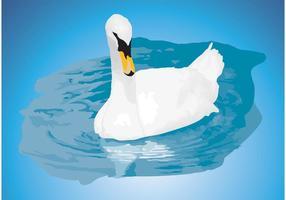 Mute Swan Vector