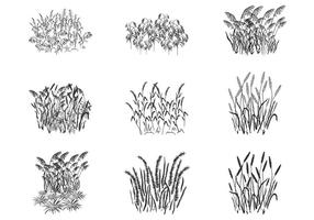 Reed Grass Plant Silhouettes Vectors