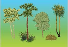 Träd Växter