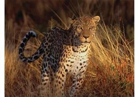 Imagen de Cheetah