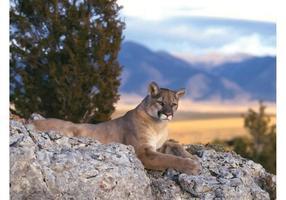 Liggande Cougar