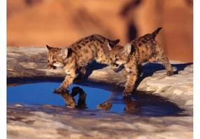 Jogando Cubs