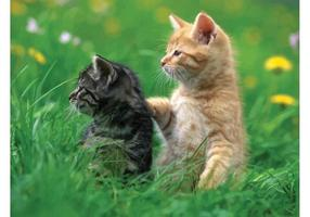 Katten spelen