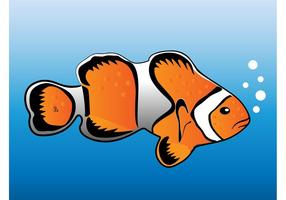 Clown-fish-vector