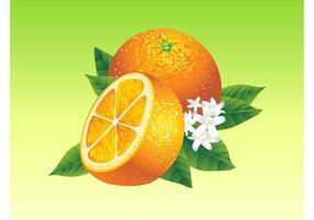 Realistische Orangen