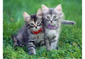 Cute Kittens Vector Image