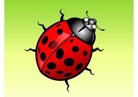 Lady Bug Cartoon