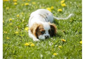 Verbergen Puppy