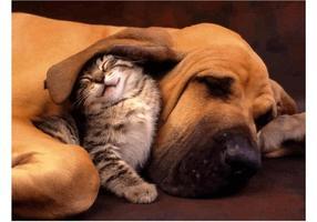 Cão de gatinho