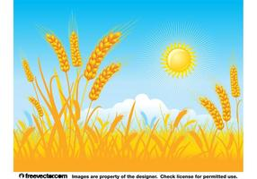 Golden Field Background