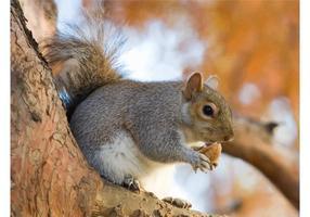 Manger l'écureuil