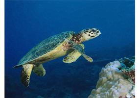 Image de la tortue de mer