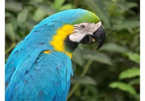 Papel pintado del loro del Macaw