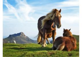 Cavalos da montanha