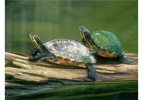 Turtles Image